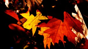autumn_leaves_199997